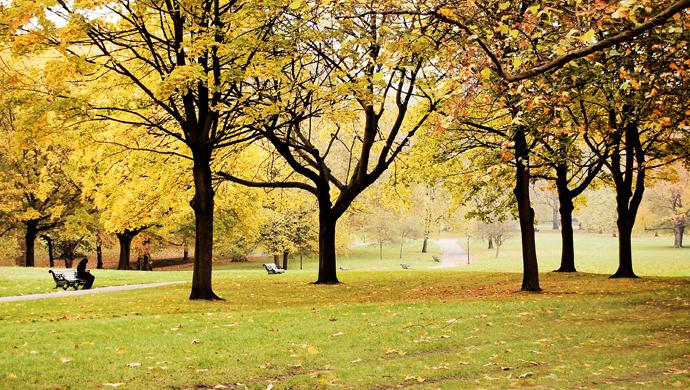 Autumn Park WODs